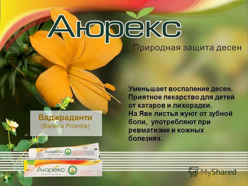 Уменьшает воспаление десен. Приятное лекарство для детей от катаров и лихорадки. На Яве листья жуют от зубной боли, употребляют при ревматизме и кожных болезнях. Ваджраданти (Barleria Prionitis)