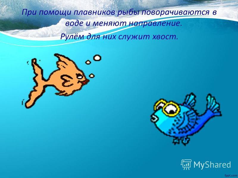 При помощи плавников рыбы поворачиваются в воде и меняют направление. Рулём для них служит хвост.