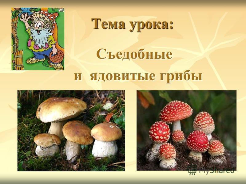 Тема урока: Тема урока: Съедобные Съедобные и ядовитые грибы и ядовитые грибы