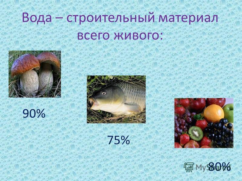 Вода – строительный материал всего живого: 90% 75% 80%