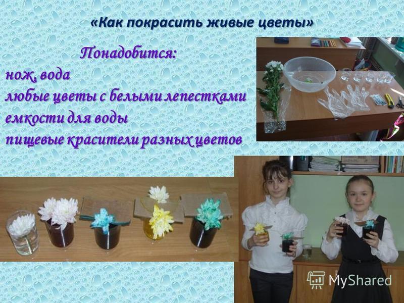 Понадобится: нож, вода любые цветы с белыми лепестками емкости для воды пищевые красители разных цветов «Как покрасить живые цветы»