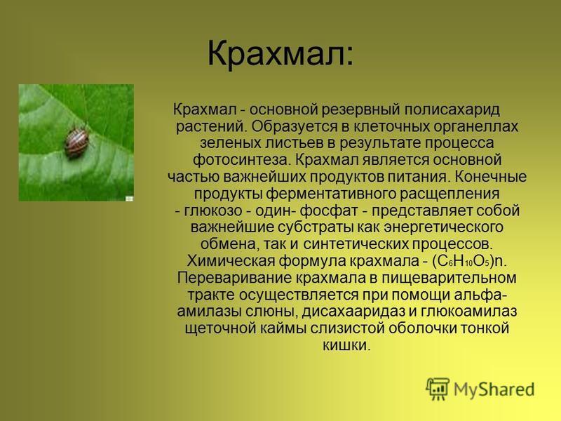 Крахмал: Крахмал - основной резервный полисахарид растений. Образуется в клеточных органеллах зеленых листьев в результате процесса фотосинтеза. Крахмал является основной частью важнейших продуктов питания. Конечные продукты ферментативного расщеплен