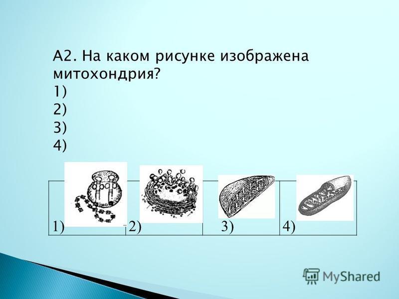 1)2) 3)4) А2. На каком рисунке изображена митохондрия? 1) 2) 3) 4)