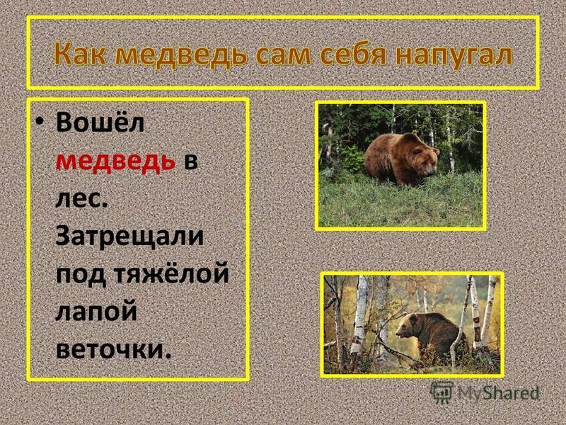 Вошёл медведь в лес. Затрещали под тяжёлой лапой веточки.