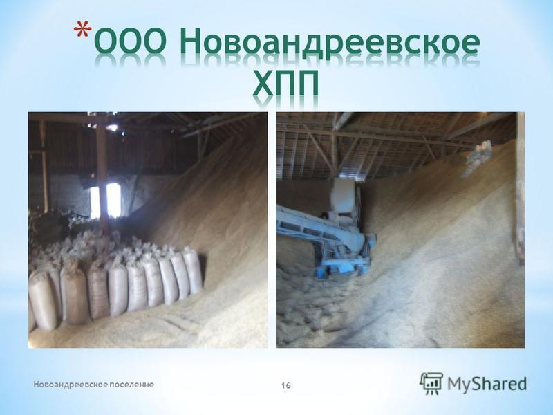 Новоандреевское поселение 16