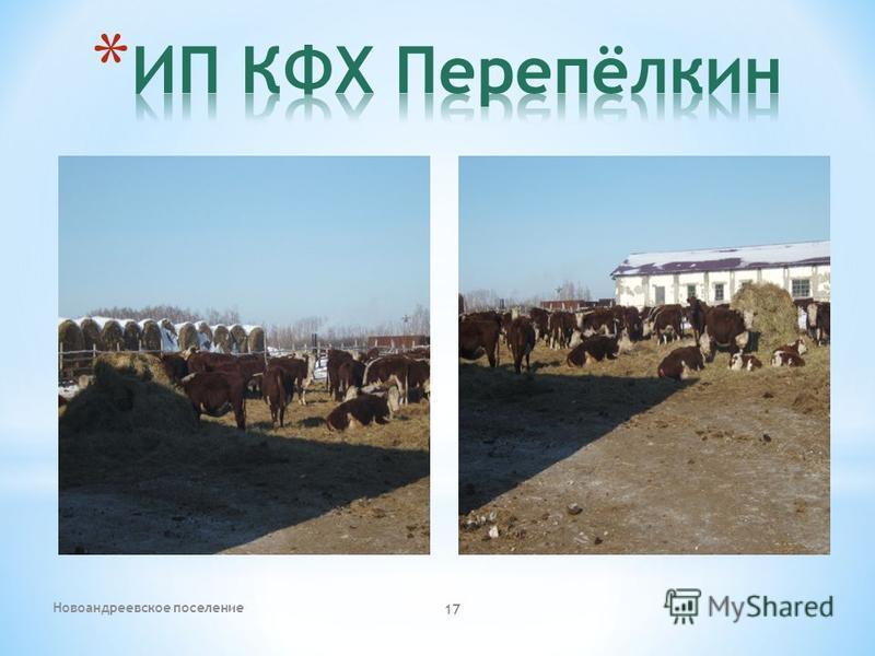 Новоандреевское поселение 17