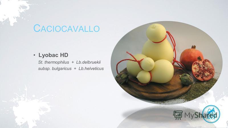 C ACIOCAVALLO Lyobac HD St. thermophilus + Lb.delbruekii subsp. bulgaricus + Lb.helveticus
