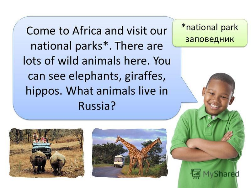 Come to Africa and visit our national parks*. There are lots of wild animals here. You can see elephants, giraffes, hippos. What animals live in Russia? *national park заповедник *national park заповедник