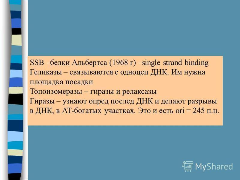 SSB –белки Альбертса (1968 г) –single strand binding Геликазы – связываются с одноцеп ДНК. Им нужна площадка посадки Топоизомеразы – гиразы и релаксазы Гиразы – узнают опред послед ДНК и делают разрывы в ДНК, в АТ-богатых участках. Это и есть ori = 2