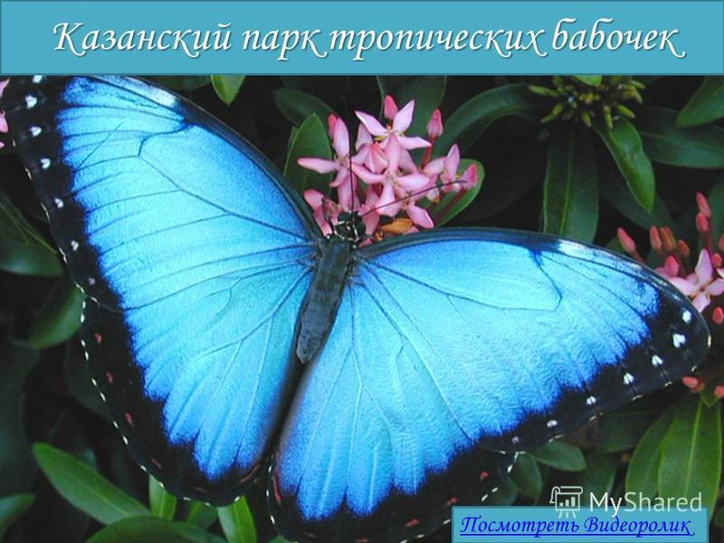Казанский парк тропических бабочек Посмотреть Видеоролик