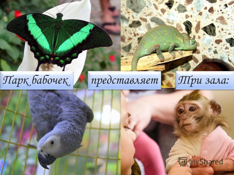 Парк бабочек представляет Три зала: