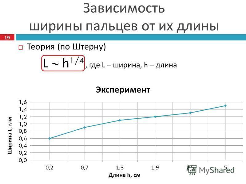 Теория ( по Штерну ) L h 1/4, где L – ширина, h – длина Зависимость ширины пальцев от их длины Эксперимент 19