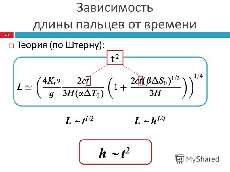 Зависимость длины пальцев от времени Теория ( по Штерну ): L t 1/2 L h 1/4 t2t2 h t 2 20