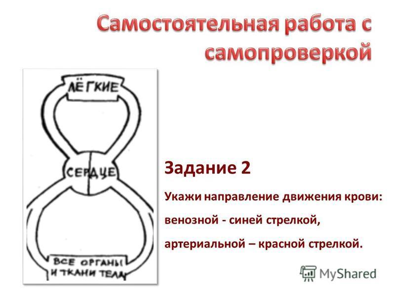 Задание 2 Укажи направление движения крови: венозной - синей стрелкой, артериальной – красной стрелкой.