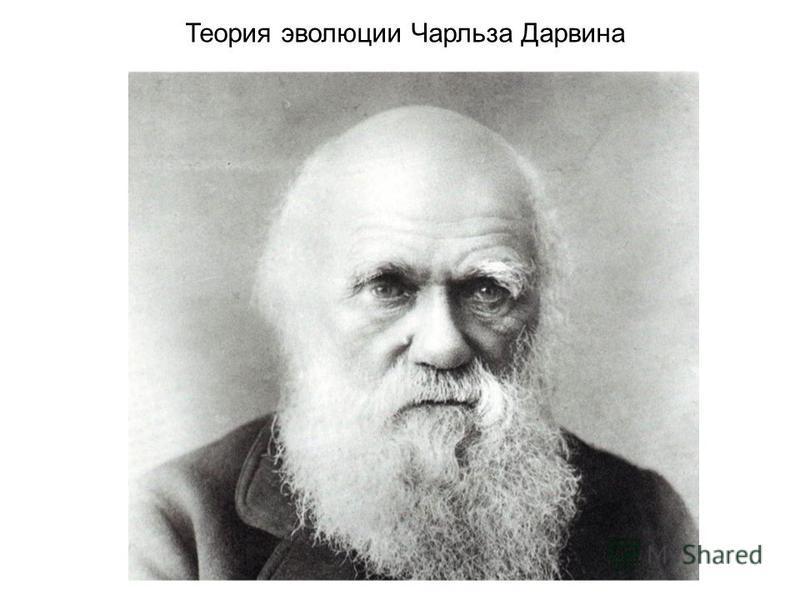 Теория эволюции Чарльза Дарвина