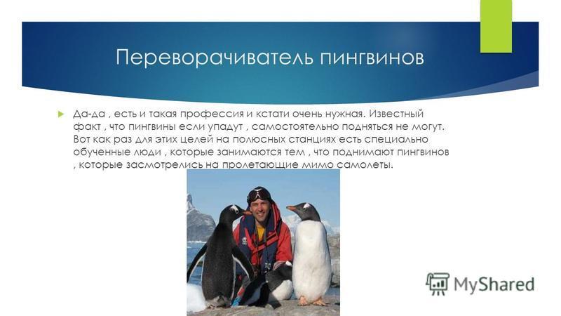 Переворачиватель пингвинов Да-да, есть и такая профессия и кстати очень нужная. Известный факт, что пингвины если упадут, самостоятельно подняться не могут. Вот как раз для этих целей на полюсных станциях есть специально обученные люди, которые заним