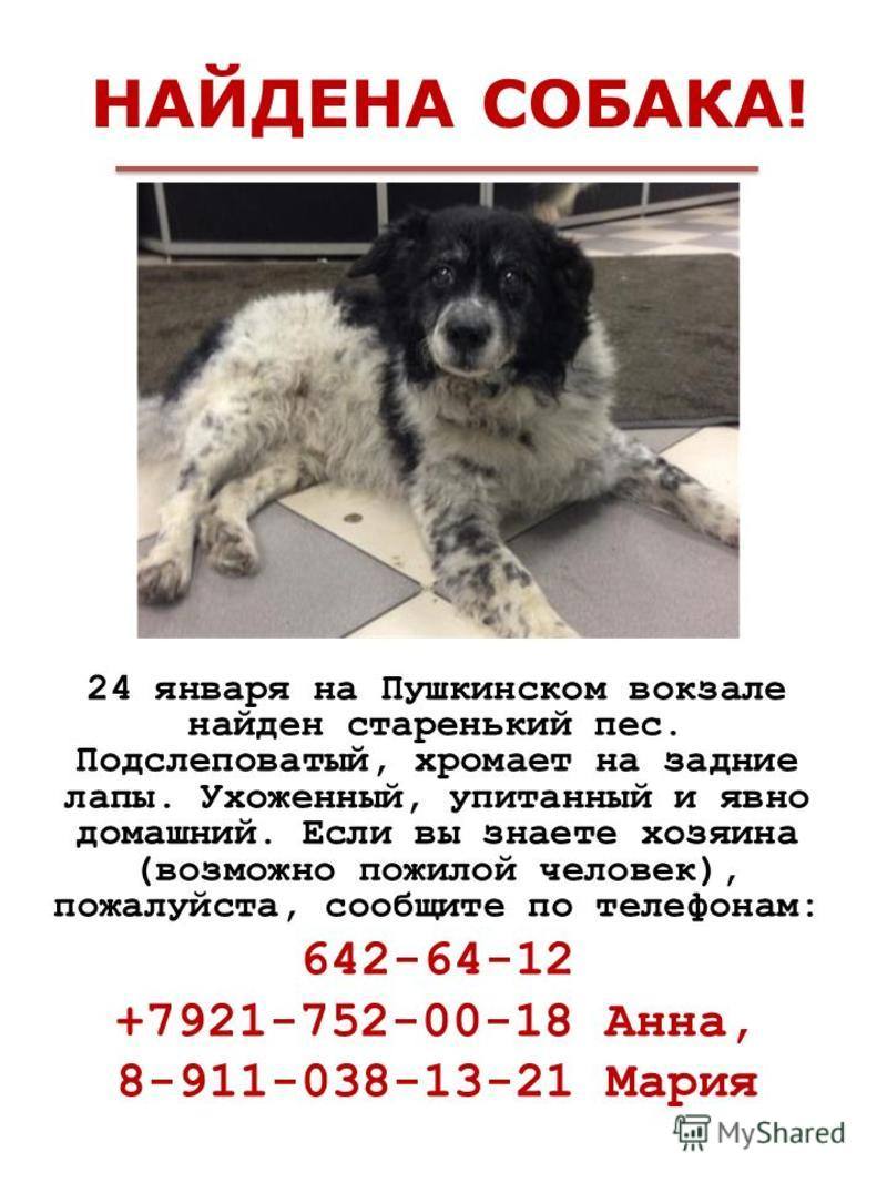 НАЙДЕНА СОБАКА! 24 января на Пушкинском вокзале найден старенький пес. Подслеповатый, хромает на задние лапы. Ухоженный, упитанный и явно домашний. Если вы знаете хозяина (возможно пожилой человек), пожалуйста, сообщите по телефонам: 642-64-12 +7921-