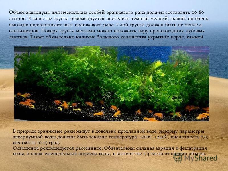 Объем аквариума для нескольких особей оранжевого рака должен составлять 60-80 литров. В качестве грунта рекомендуется постелить темный мелкий гравий: он очень выгодно подчеркивает цвет оранжевого рака. Слой грунта должен быть не менее 4 сантиметров.