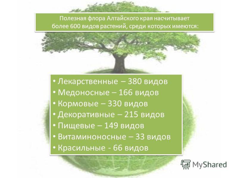 Полезная флора Алтайского края насчитывает более 600 видов растений, среди которых имеются: Полезная флора Алтайского края насчитывает более 600 видов растений, среди которых имеются: Лекарственные – 380 видов Медоносные – 166 видов Кормовые – 330 ви
