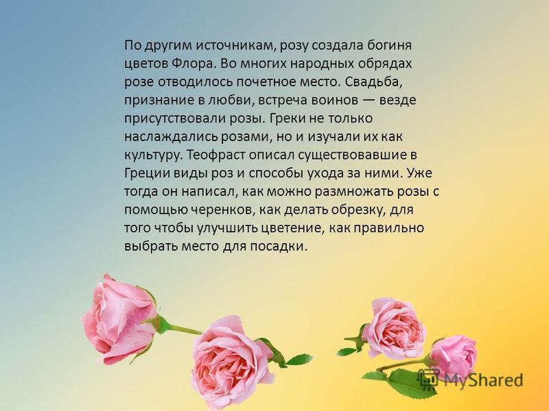 По другим источникам, розу создала богиня цветов Флора. Во многих народных обрядах розе отводилось почетное место. Свадьба, признание в любви, встреча воинов везде присутствовали розы. Греки не только наслаждались розами, но и изучали их как культуру