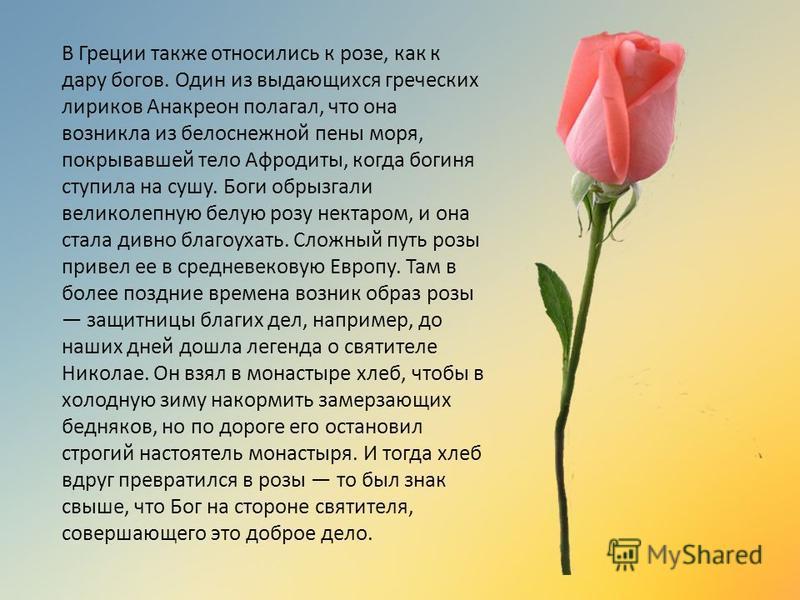 В Греции также относились к розе, как к дару богов. Один из выдающихся греческих лириков Анакреон полагал, что она возникла из белоснежной пены моря, покрывавшей тело Афродиты, когда богиня ступила на сушу. Боги обрызгали великолепную белую розу нект