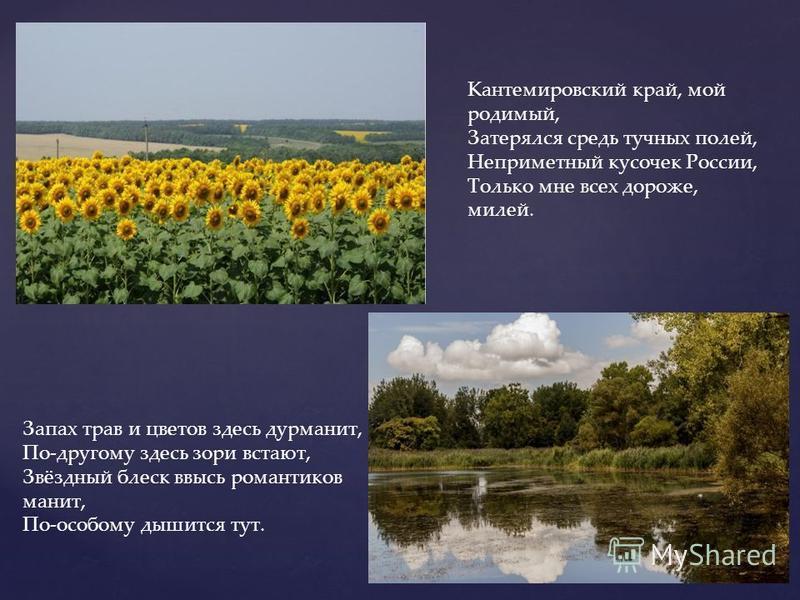 Кантемировский край, мой родимый, Затерялся средь тучных полей, Неприметный кусочек России, Только мне всех дороже, милей. Запах трав и цветов здесь дурманит, По-другому здесь зори встают, Звёздный блеск ввысь романтиков манит, По-особому дышится тут