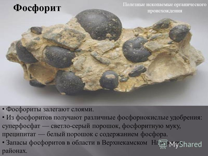 Фосфорит Фосфориты залегают слоями. Из фосфоритов получают различные фосфорнокислые удобрения : суперфосфат светло - серый порошок, фосфоритную муку, преципитат белый порошок с содержанием фосфора. Запасы фосфоритов в области в Верхнекамском Нагорско