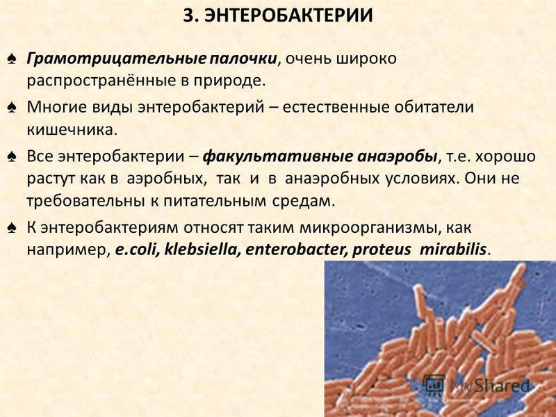 3. ЭНТЕРОБАКТЕРИИ Грамотрицательные палочки, очень широко распространённые в природе. Многие виды энтеробактерий – естественные обитатели кишечника. Все энтеробактерии – факультативные анаэробы, т.е. хорошо растут как в аэробных, так и в анаэробных у