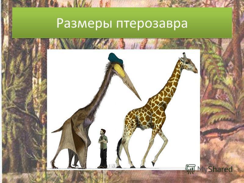 Размеры птерозавра
