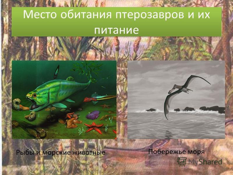 Место обитания птерозавров и их питание Рыбы и морские животные Побережье моря