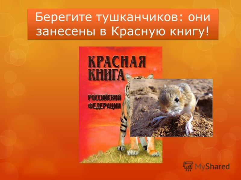 Берегите тушканчиков: они занесены в Красную книгу!