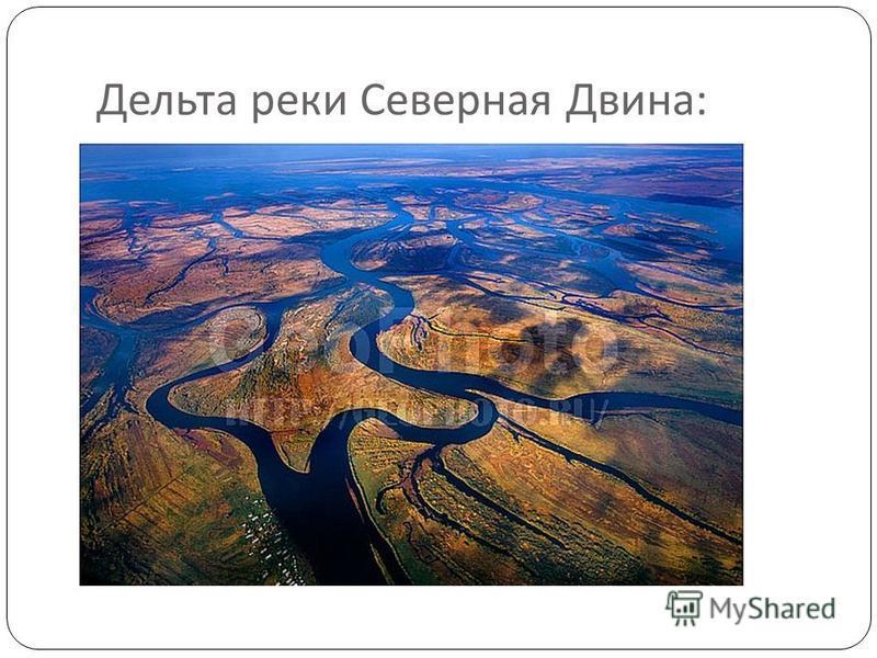 Дельта реки Северная Двина :