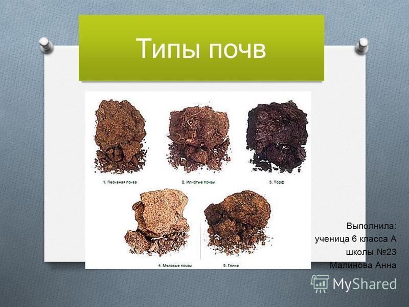 Типы почв Выполнила : ученица 6 класса А школы 23 Малинова Анна