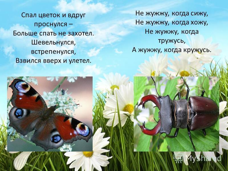 Спал цветок и вдруг проснулся – Больше спать не захотел. Шевельнулся, встрепенулся, Взвился вверх и улетел. Не жужжу, когда сижу, Не жужжу, когда хожу, Не жужжу, когда тружусь, А жужжу, когда кружусь.