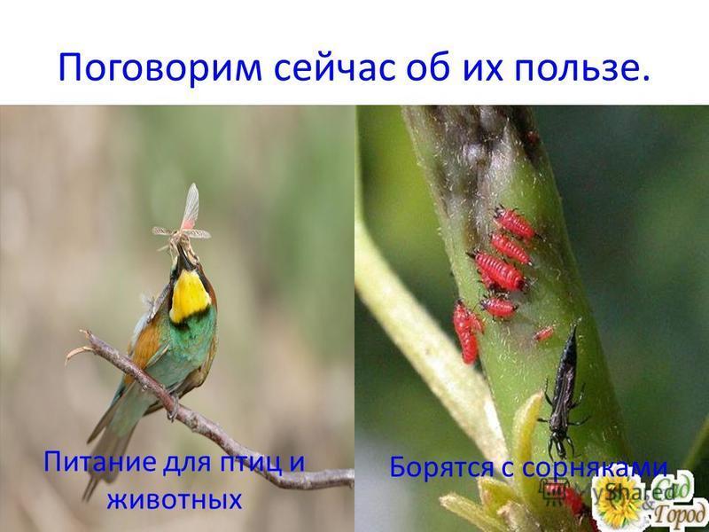 Поговорим сейчас об их пользе. Питание для птиц и животных Борятся с сорняками