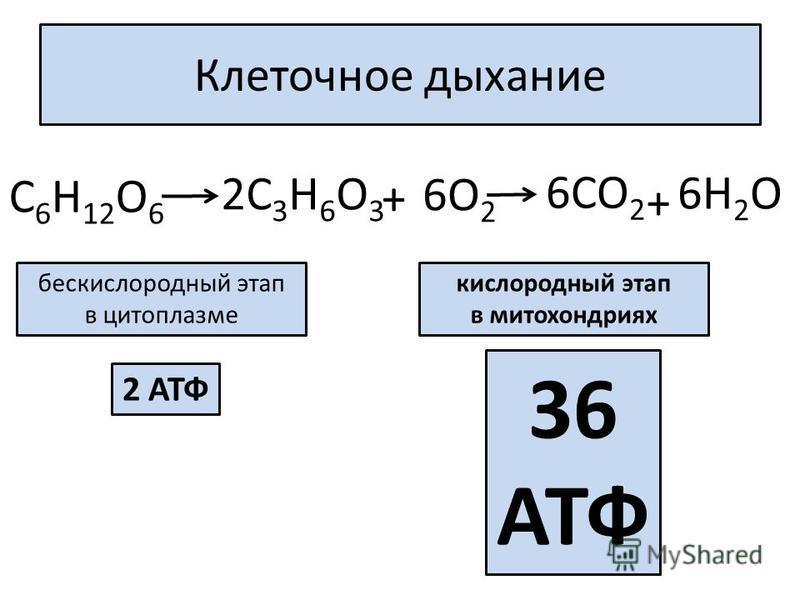 Клеточное дыхание 6СО 2 С 6 Н 12 О 6 2С 3 Н 6 О 3 + 6О 2 6Н 2 О + бескислородный этап в цитоплазме кислородный этап в митохондриях 2 АТФ 36 АТФ