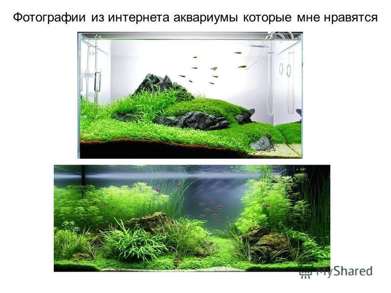 Фотографии из интернета аквариумы которые мне нравятся