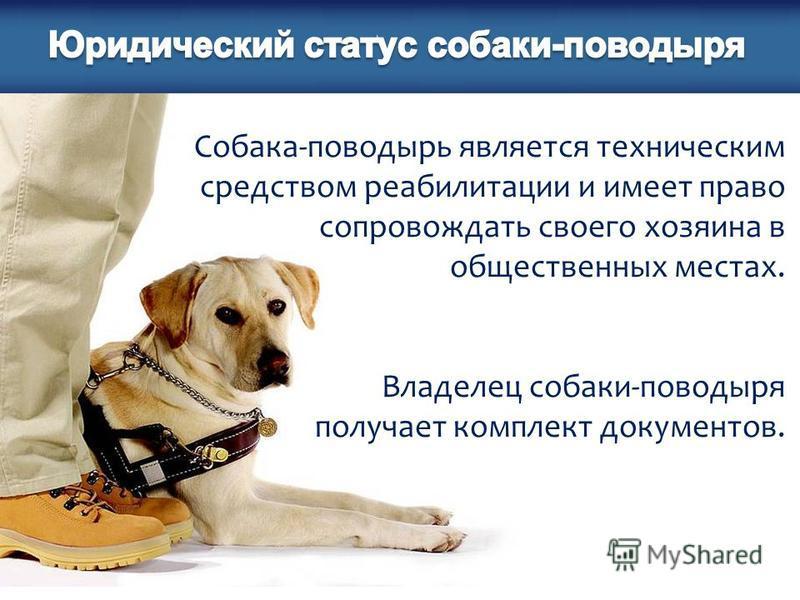 Собака-поводырь является техническим средством реабилитации и имеет право сопровождать своего хозяина в общественных местах. Владелец собаки-поводыря получает комплект документов.