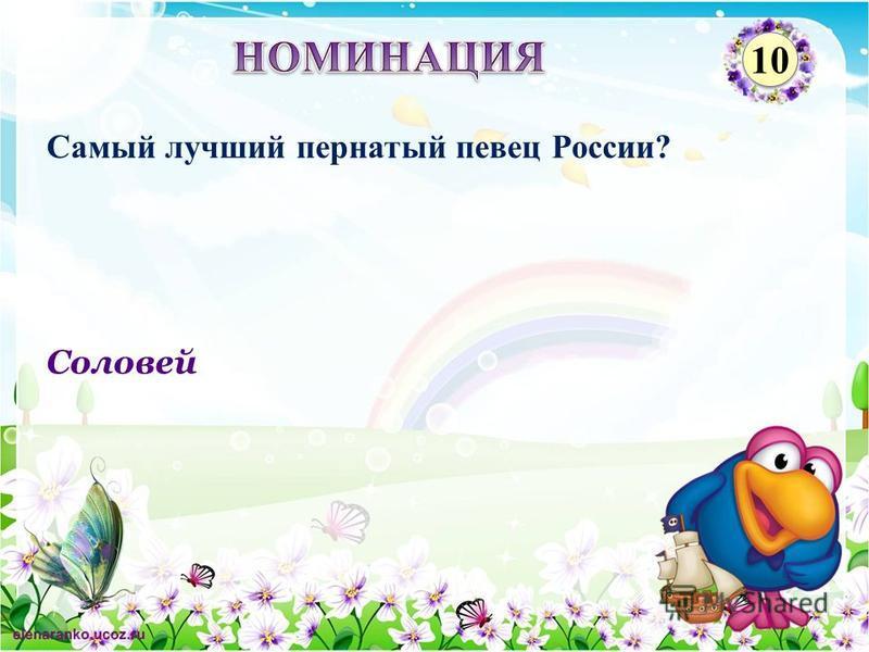 Соловей Самый лучший пернатый певец России? 10
