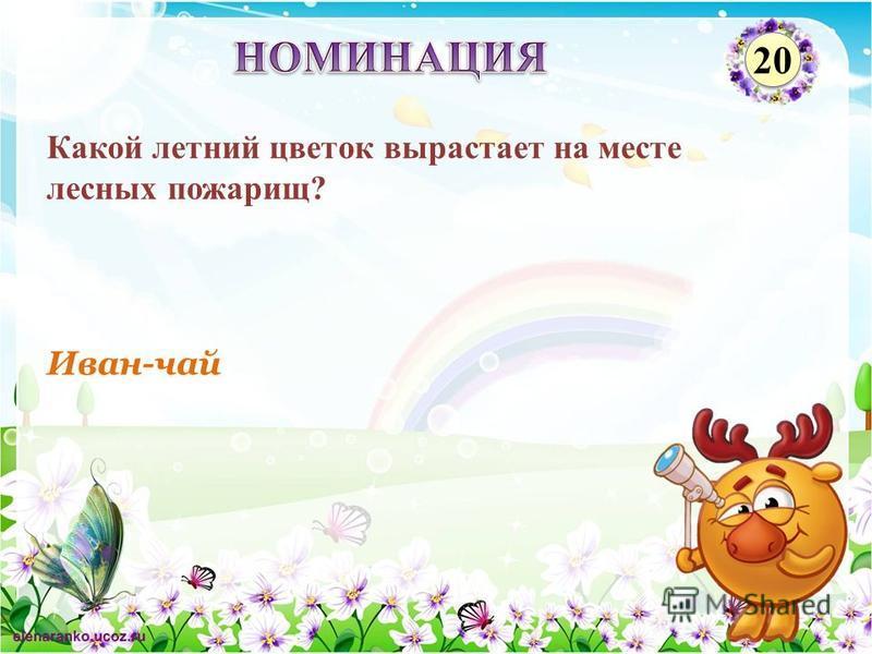 Иван-чай Какой летний цветок вырастает на месте лесных пожарищ? 20