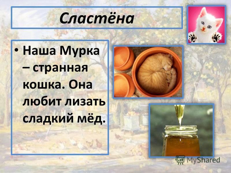 Сластёна Наша Мурка – астранна я кошка. Она любит лизать зладкий мёд.