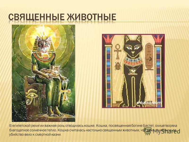 В египетской религии важная роль отводилась кошке. Кошка, посвященная богине Бастет, олицетворяла благодатное солнечное тепло. Кошка считалась настолько священным животным, что даже случайное ее убийство вело к смертной казни.
