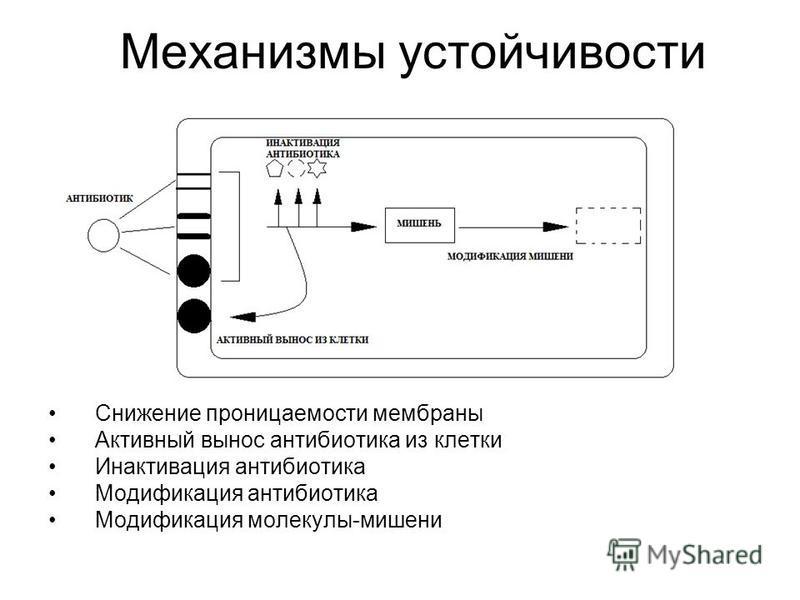 Механизмы устойчивости Снижение проницаемости мембраны Активный вынос антибиотика из клетки Инактивация антибиотика Модификация антибиотика Модификация молекулы-мишени