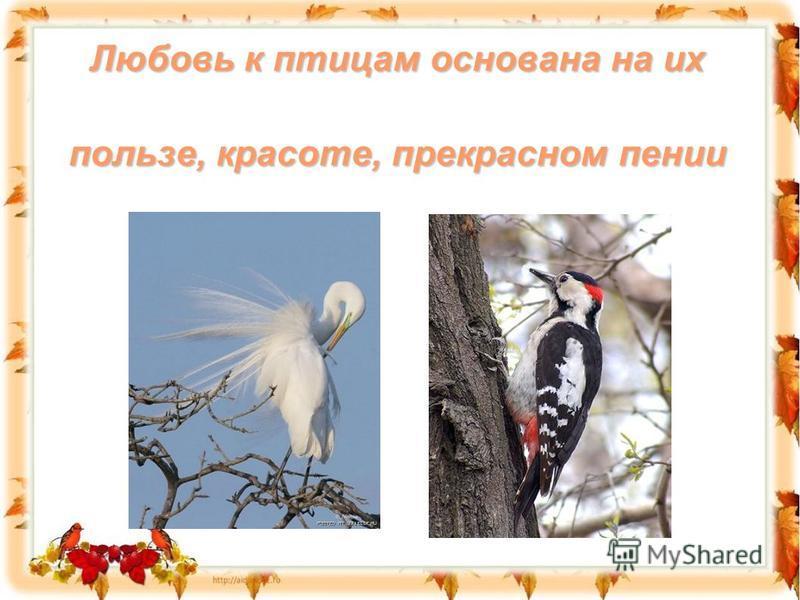 Любовь к птицам основана на их пользе, красоте, прекрасном пении
