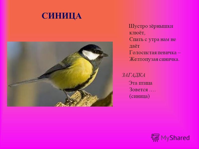 СИНИЦА Шустро зёрнышки клюёт, Спать с утра нам не даёт Голосистая певичка – Желтопузая синичка. ЗАГАДКА Эта птица Зовется …. (синица)
