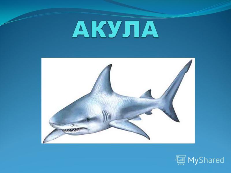 И в морях, и в океанах Рыба страшная живёт: Пасть с ужасными зубами И большой-большой живот.