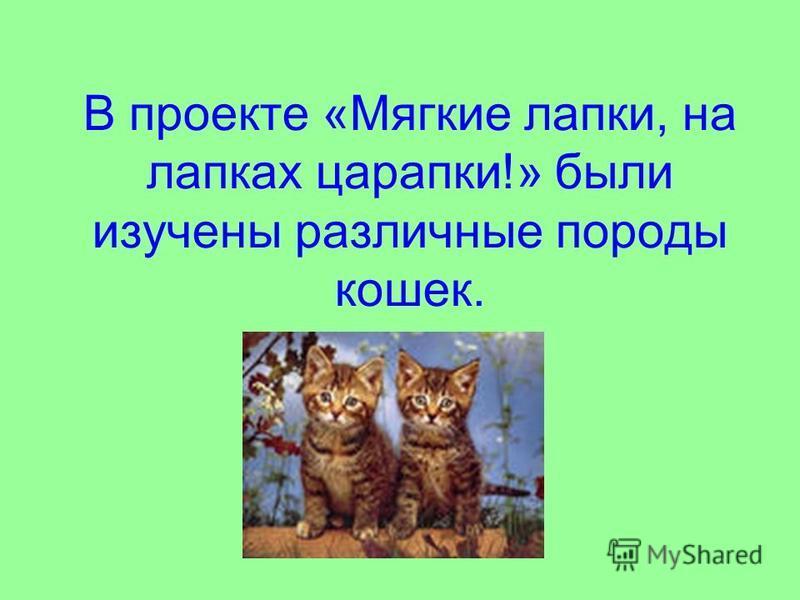 В проекте «Мягкие лапки, на лапках царапки!» были изучены различные породы кошек.