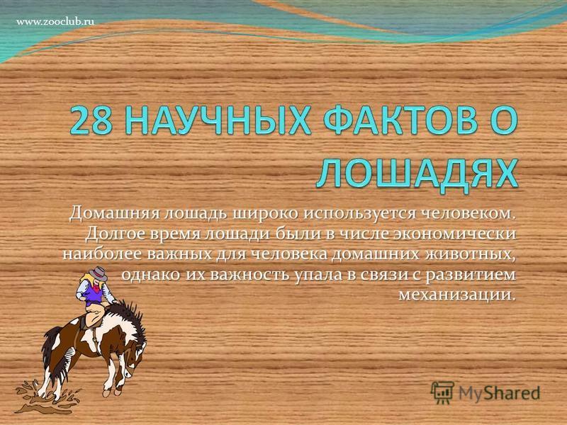 Домашняя лошадь широко используется человеком. Долгое время лошади были в числе экономически наиболее важных для человека домашних животных, однако их важность упала в связи с развитием механизации. www.zooclub.ru