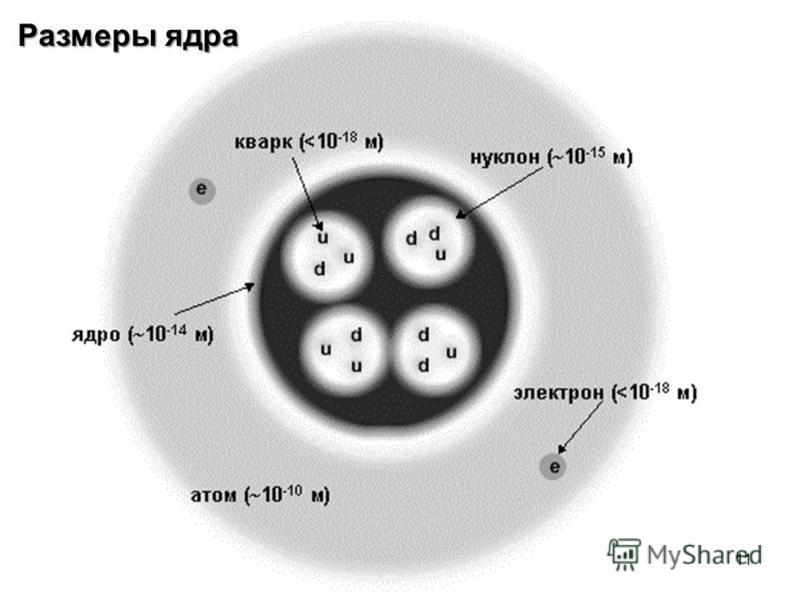 Размеры ядра 11