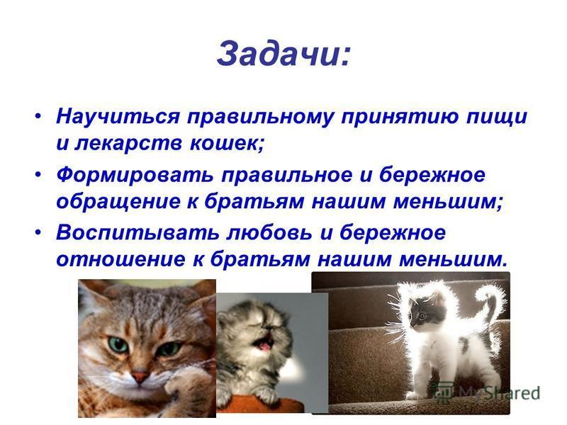 Задачи: Научиться правильному принятию пищи и лекарств кошек; Формировать правильное и бережное обращение к братьям нашим меньшим; Воспитывать любовь и бережное отношение к братьям нашим меньшим.